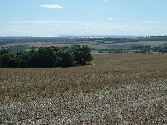 Isolated clump of trees on Haye's Down