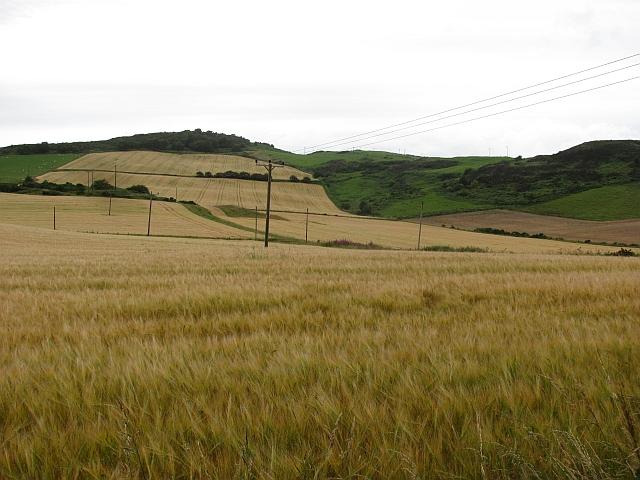Barley, Ormiston