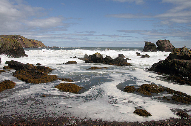 The shoreline at St Abbs