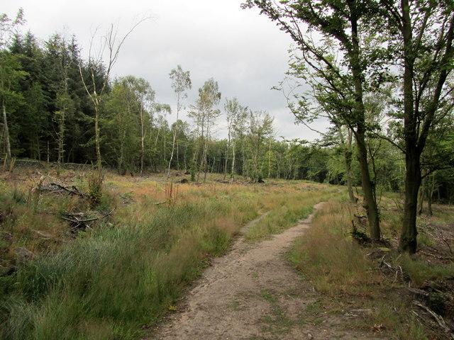 In Norwood Edge Plantation