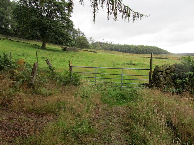 Looking towards Pasture beside Norwood Edge Plantation