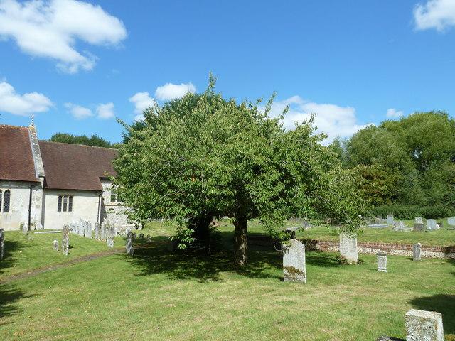 All Saints, Upper Clatford: churchyard in August 2011 (a)