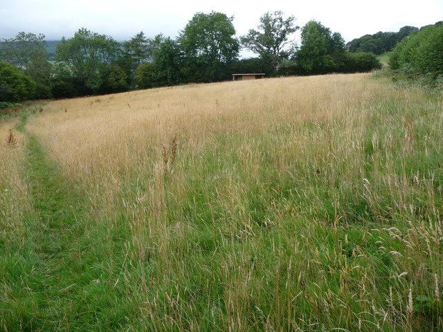 Grassy meadow above Llangenny