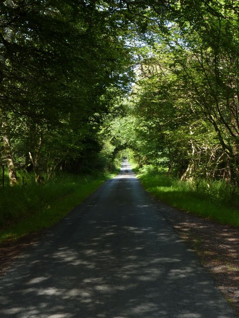 Woods at Kildalton, Isle of Islay