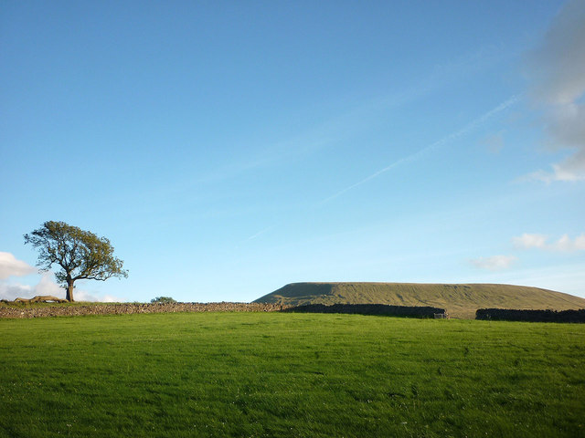 A tree and Pendle Hill