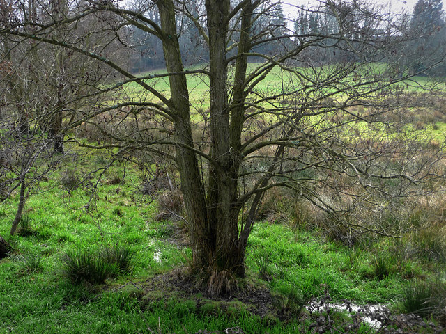 Boggy area