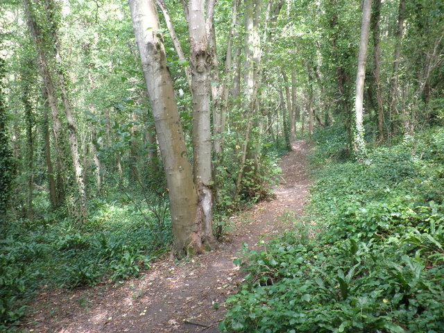Path through Cridland's Copse