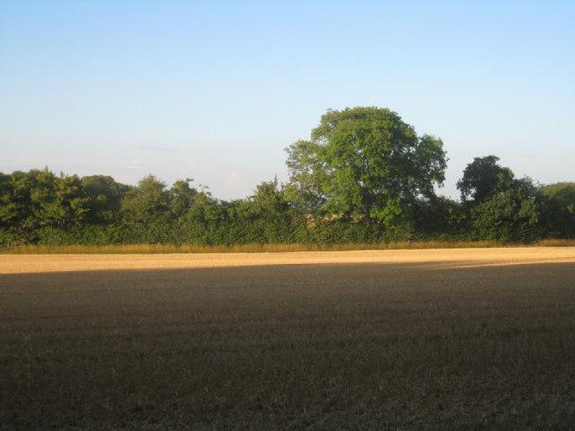 Harvested wheat field - Pardown
