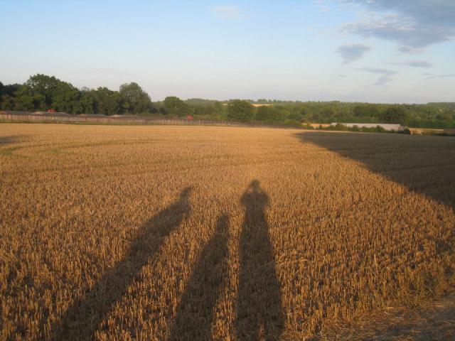 Three long shadows