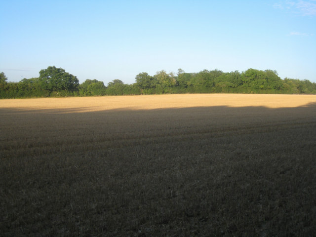 Harvested farmland
