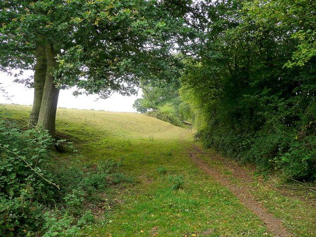 Edge of pasture