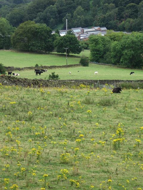 Holloway - view towards Lea Mills