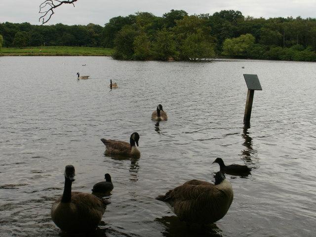 Bird life on the Pen Ponds, Richmond Park