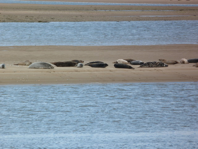 A colourful group of seals at Loch Fleet