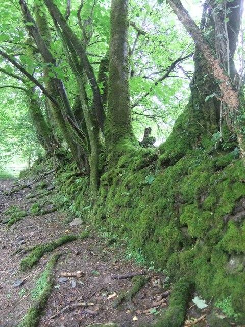 Mossy wall near Ysgarwen