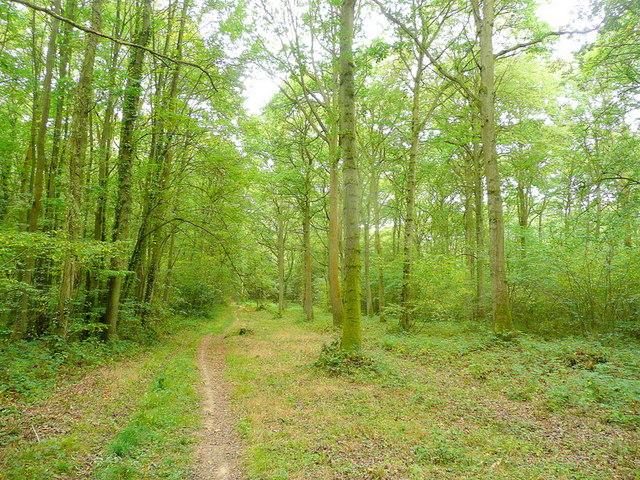 Collinpark Wood 2