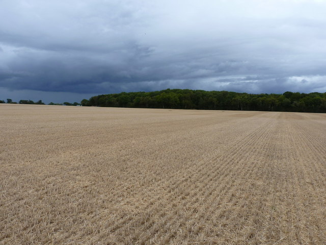 Betton Coppice across a harvested wheatfield