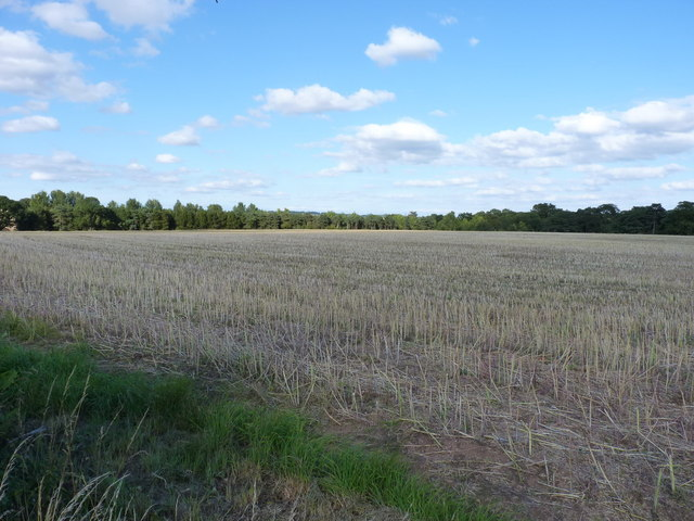 Wheatfield near Chesterton