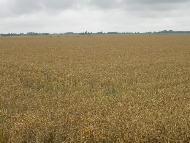 Farmland off the A161