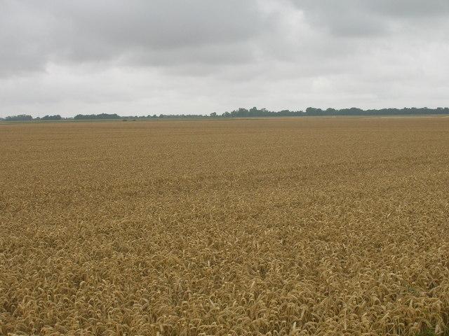 Farmland off New Lane