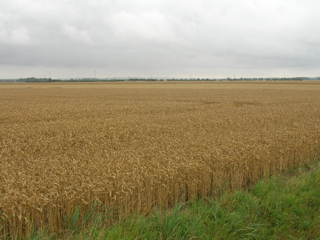 Farmland, Marsh Furlong