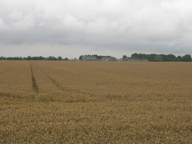 Farmland, Low East Moor Field