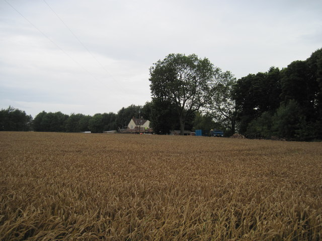 Across  a  Cornfield  to  Keepers  Cottage