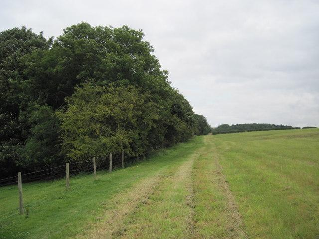Centenary  Way  past  Abbey  Plantation