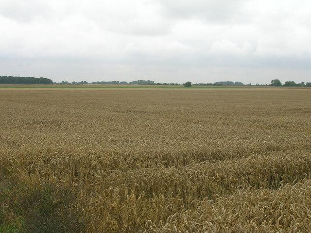 Farmland, Hall Fields