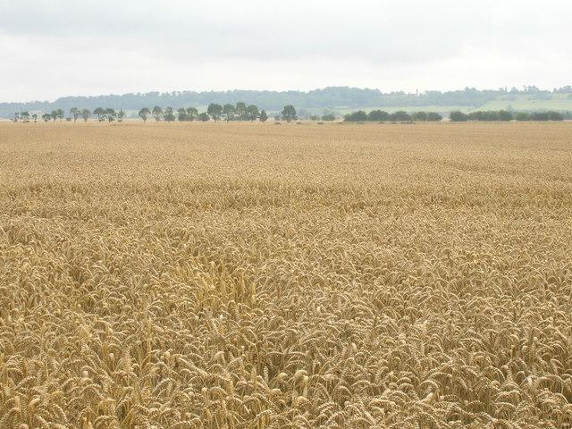 Farmland south of Adlingfleet