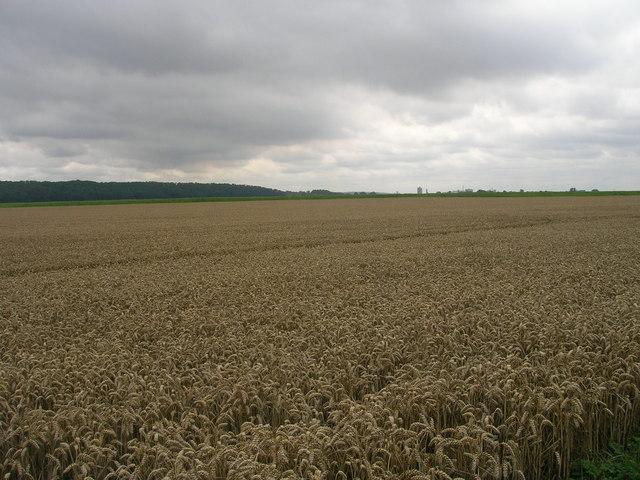 Farmland near Waterton Hall