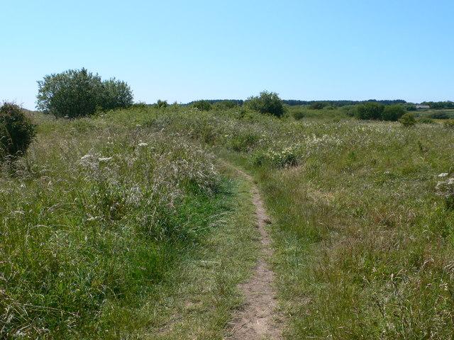 The Path to Llanddwyn Beach through Newborough Warren