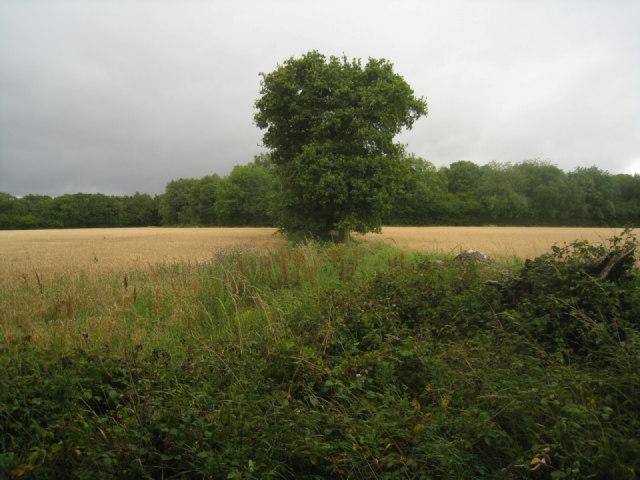 Field boundary by Pardown Copse