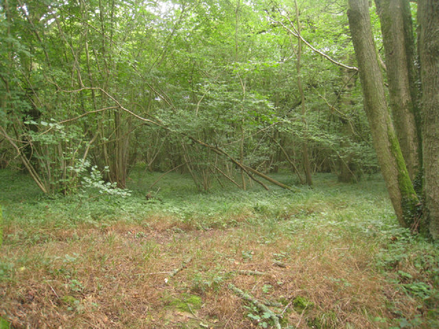 Inside Small's Copse