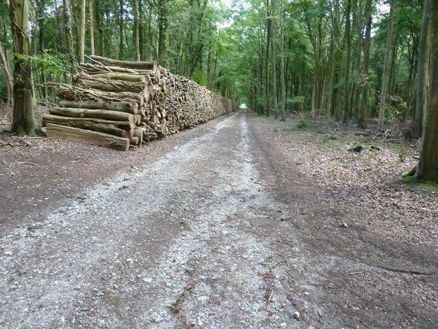 Log piles on woodland track