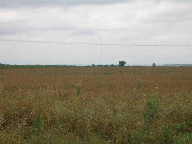 Farmland near Crowle Grange