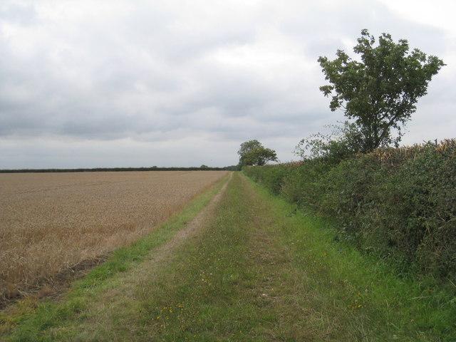 Field edge and farm track near East Halton Grange