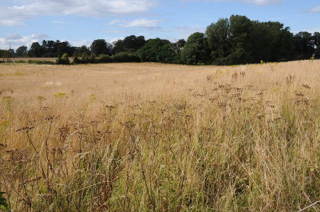 Field at Hartlebury