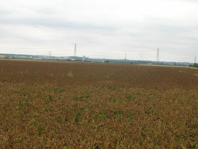 Farmland of Ox Pasture Lane