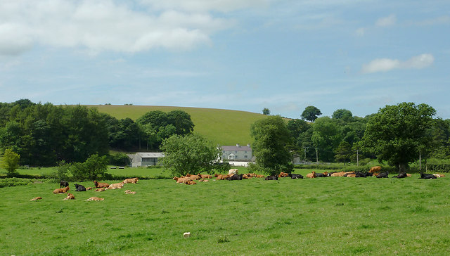 Pasture south of Olmarch, Ceredigion