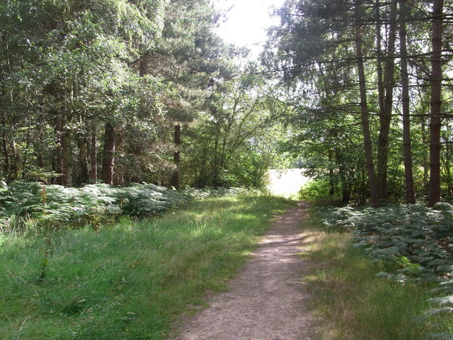 Leaving the woodland