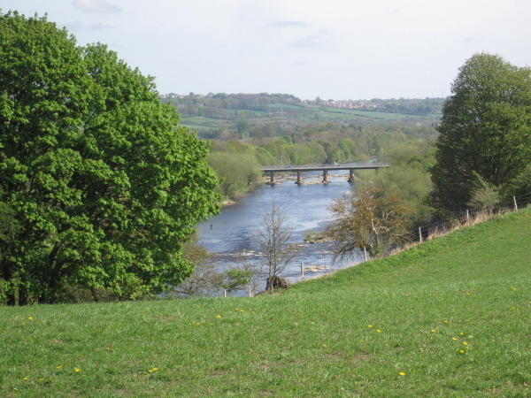 River Tyne and Wylam Bridge