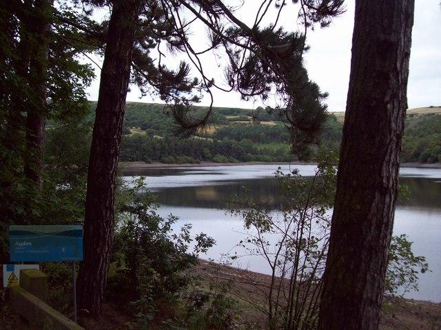 Scots Pines by Agden Reservoir