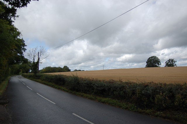 Swattenden Lane and crop field