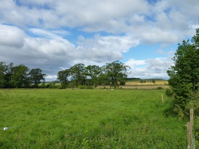 Moneydie field