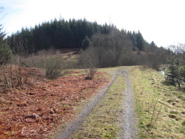 Forest Track Junction, below Watson's Walls