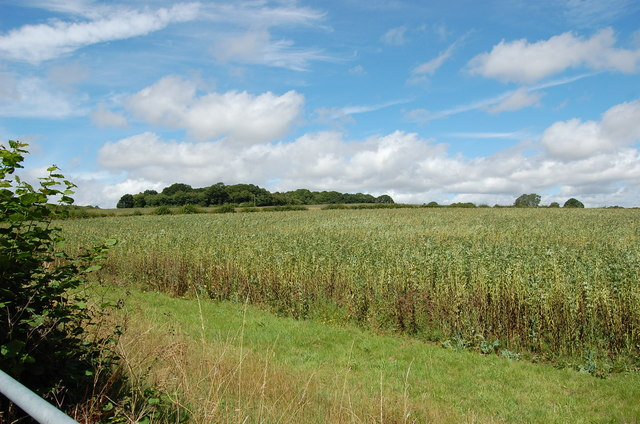 Crop field off A262