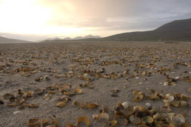 Cockle shells on Fadhail Sheileboist