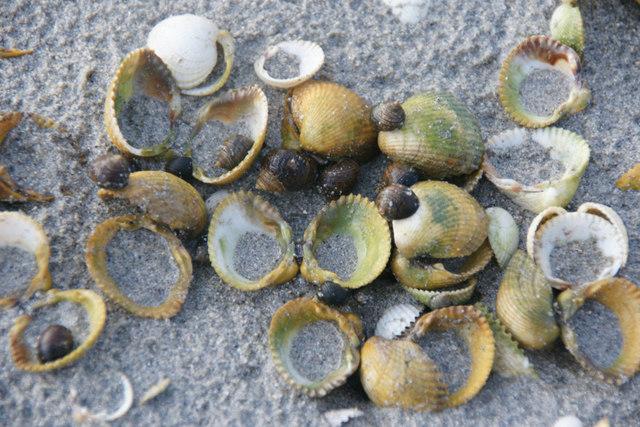 Shells on Fadhail Sheileboist