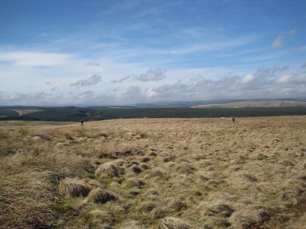 Chirdon Moor